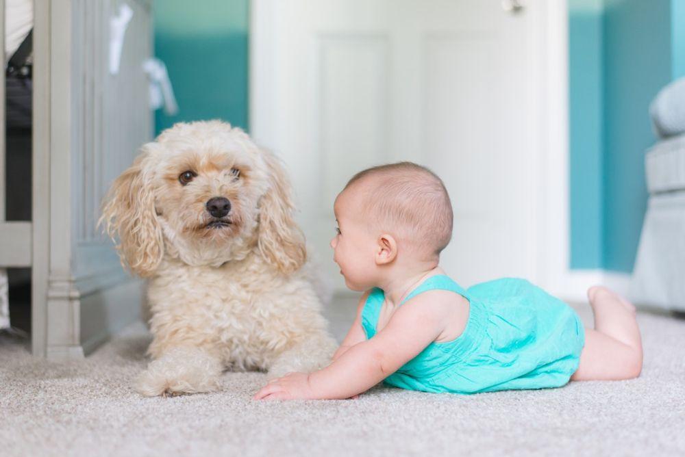 Pes a dítě. Je to bezpečné? Jak to skloubit dohromady? (2020)